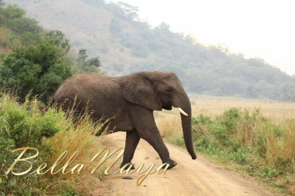 Safari Trip (10)