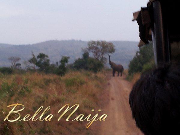 Safari Trip (3)