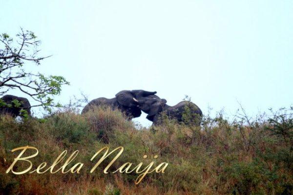 Safari Trip (9)