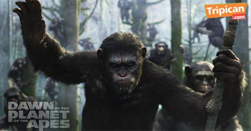Tripican presents Dawn of the Planet of the Apes - Bellanaija - July2014003
