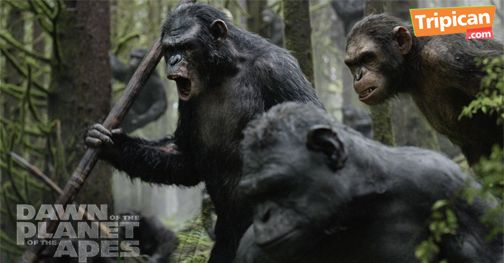 Tripican presents Dawn of the Planet of the Apes - Bellanaija - July2014004