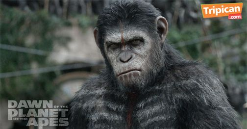 Tripican presents Dawn of the Planet of the Apes - Bellanaija - July2014006