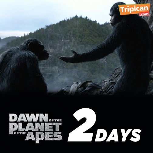 Tripican presents Dawn of the Planet of the Apes - Bellanaija - July2014008