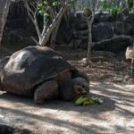 Pepe the Tortoise BellaNaija