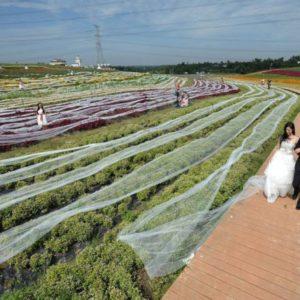 chinese woman wedding dress 1