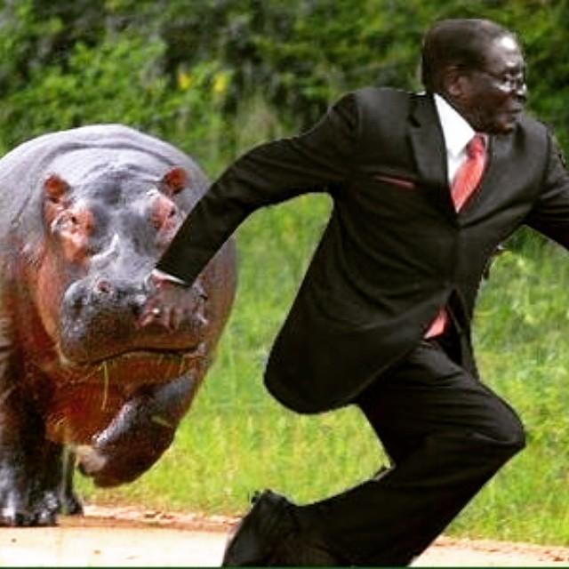 Mugabe 3