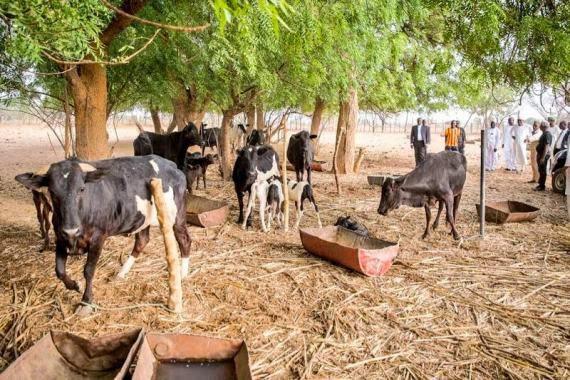 20 reportedly killed in Taraba, with 200 Cows Stolen - BellaNaija