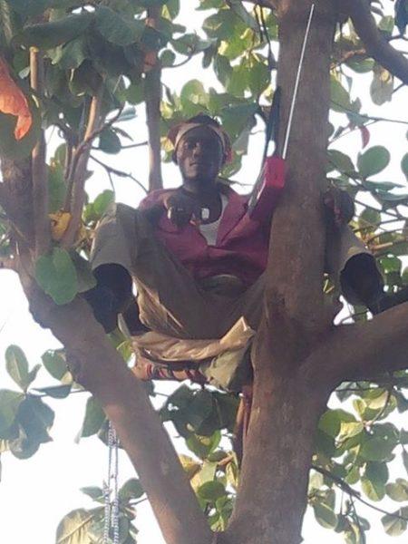 Man Climbs Tree for Buhari