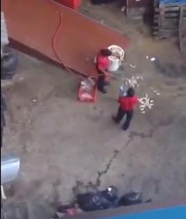 floor washing chicken