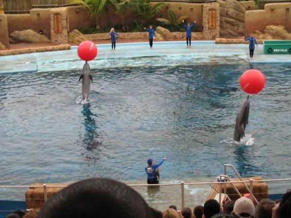 Dolphin show, Ushaka Marine World, Durban