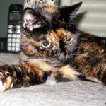 Tiffany-Cat