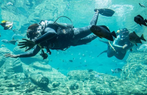 Vimbai & Gaetano Shark Dive