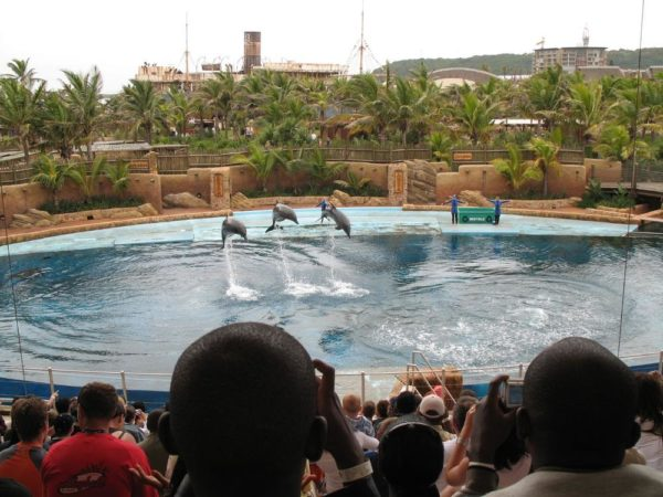 Dolphin show at Ushaka Marine World, Durban