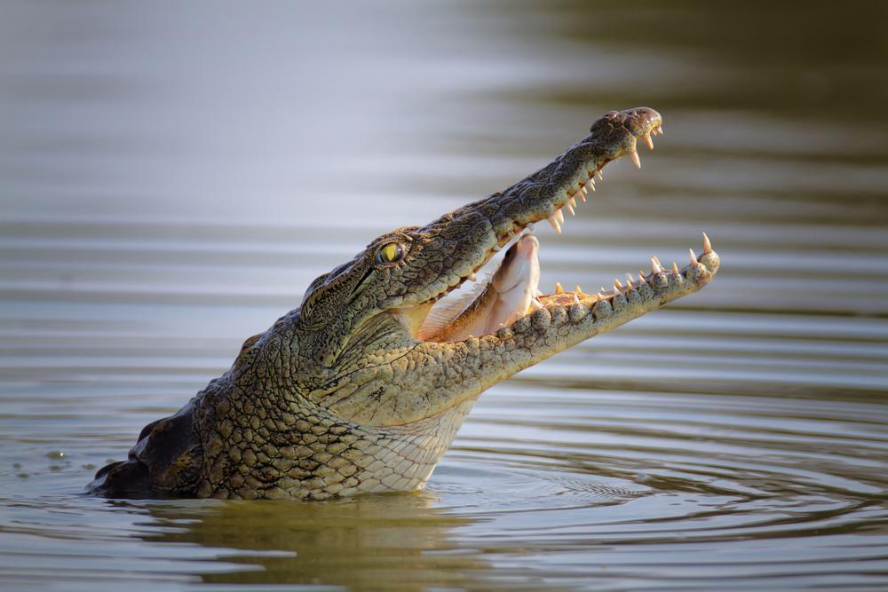 Crocodiles kill 175 people in Western Mozambique in 5 ...