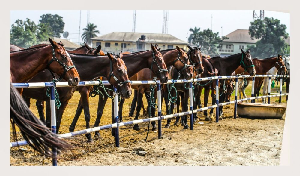 2016 Port Harcourt Polo Tournament Sponsored byStudio 24 - BellaNaija - Januray2016049