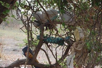Army Operation Borno 2