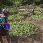 woman on farm in nigeria | Photo credit Nsoedo Frank foto.com.ng