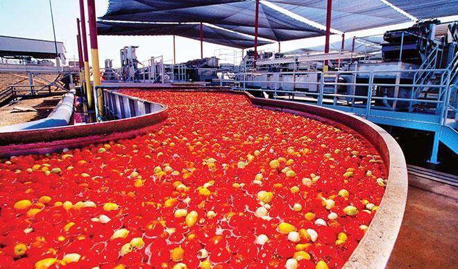Dangote Tomato NAN