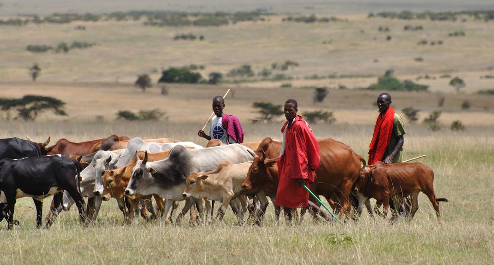File Photo: Herdsmen