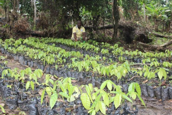Ooni Unveils One Million Cocoa Trees Nursery