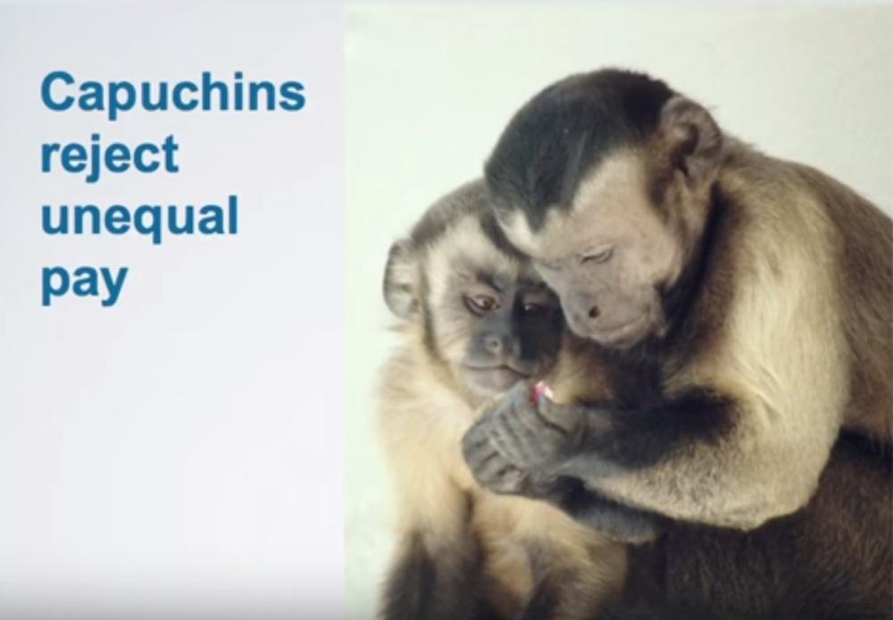 unequal pay monkeys ted talk bellanaija may2016Screen Shot 2016-05-30 at 22.59.03_