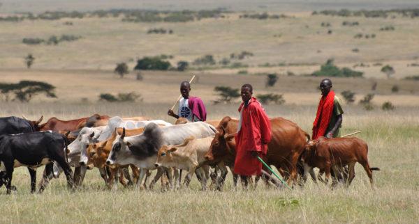 Herdsmen Killings: 14 reportedly dead in another Plateau Attack | BellaNaija