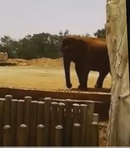 Rabat Zoo Elephant