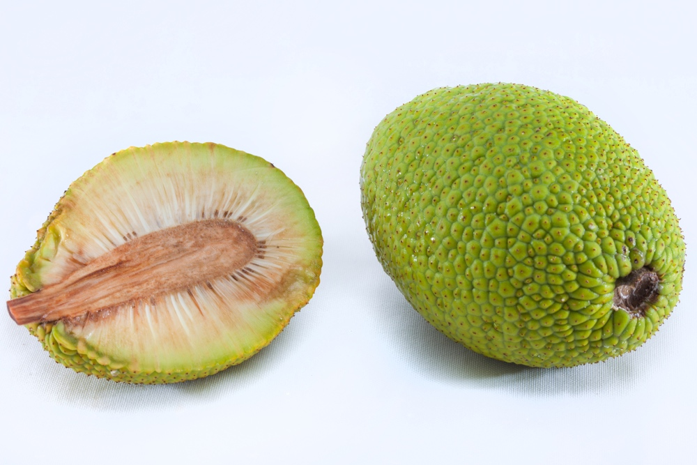 dreamstime breadfruit