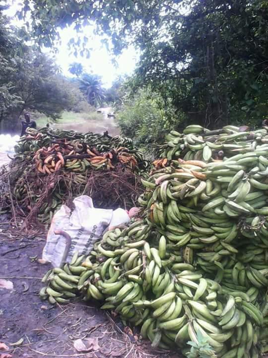 Abala Uno Farm Produce