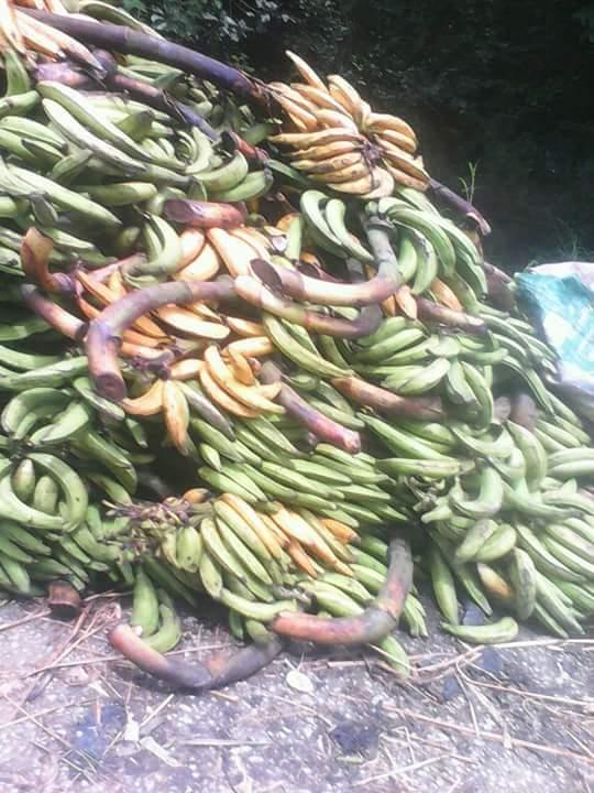 Abala Uno Farm Produce3