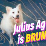 #DognappedTheMovie (Julius Agwu as Bruno)