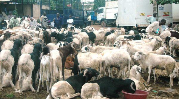 Ram Market