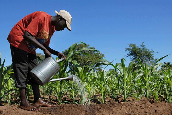 z_0004_African-farmer-000016426956_Large