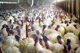 BellaNaija - FG alerts Public on outbreak of Bird Flu in 7 States and FCT