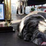 Meet the World's Ugliest Dog Martha!