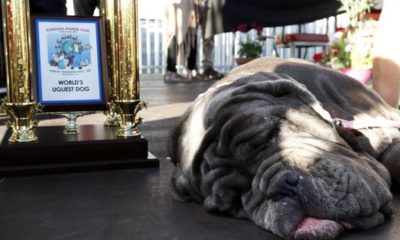 Meet the World's Ugliest Dog Martha!